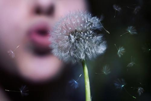 dandelion,my,blowing,girl-15697bc8d9fce6cd4163e693f566a7e8_h